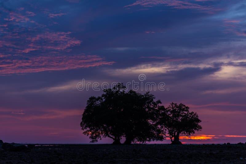 Profili il tiro della vista del paesaggio dell'albero nella penombra fotografia stock libera da diritti