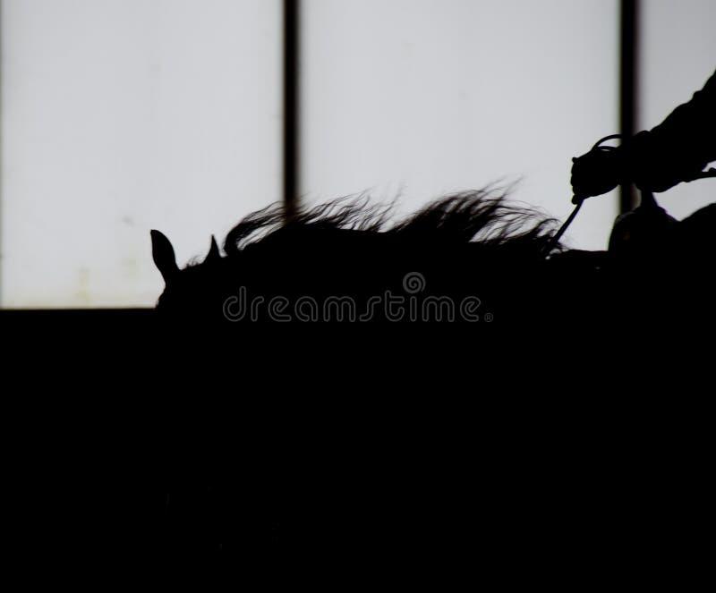 Profilo del cavallo scuro con la sella immagini stock