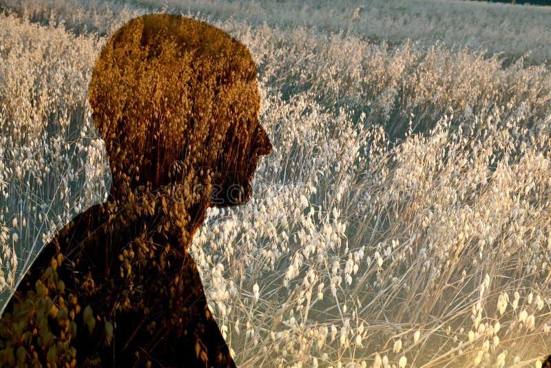 Profilo dell'uomo nel campo di grano fotografia stock
