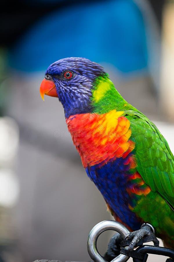 Profilo esotico dell'uccello fotografie stock libere da diritti