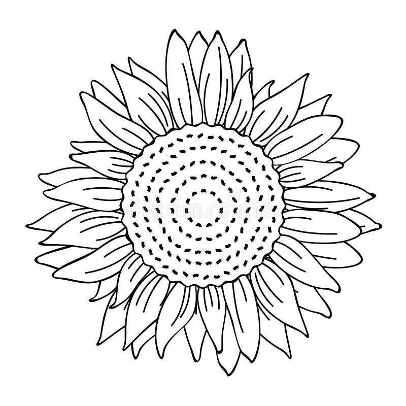 Profilo semplice del disegno del girasole per il libro da colorare illustrazione di stock