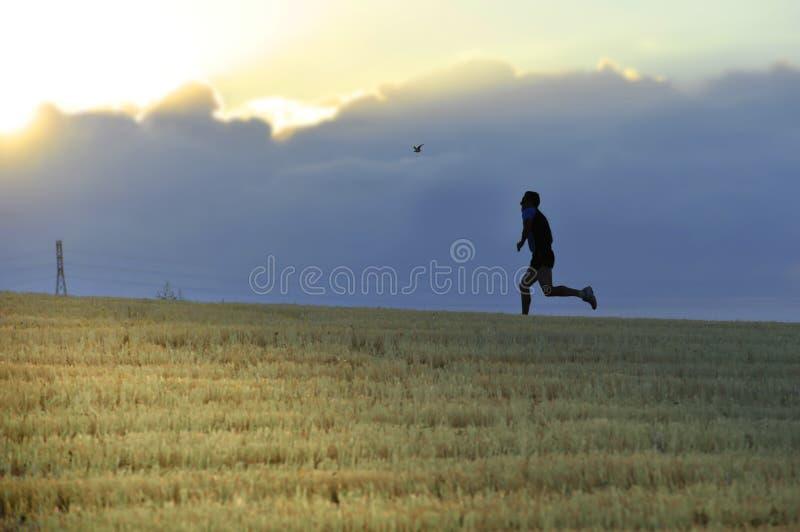 Profilowa sylwetka młodego człowieka bieg w wsi trenuje przecinającego kraju jogging dyscyplinę w lato zmierzchu fotografia stock