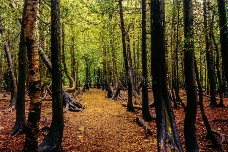 Profondément à l'intérieur de la forêt, Bruce Peninsula, DESSUS, le Canada image stock