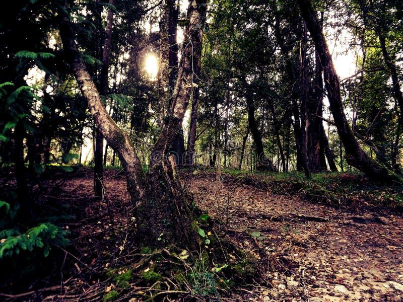 Profondément dans la forêt image libre de droits