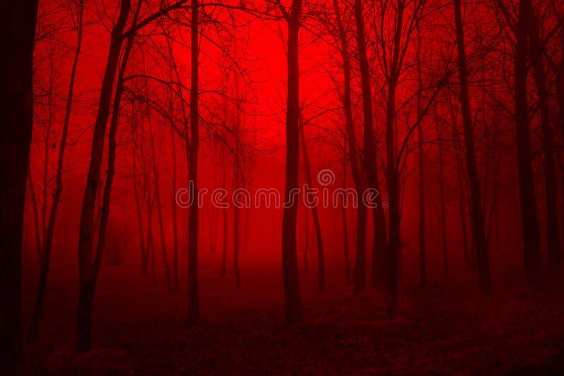 Profondément dans les bois photographie stock libre de droits