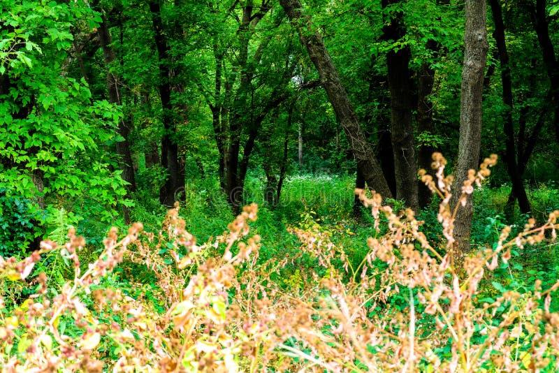 Profondément dans les bois photographie stock