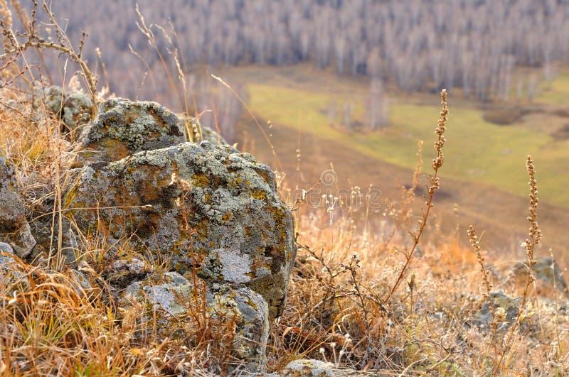 Profondeur de vue de champ des pierres de roche couvertes de lichen entouré par l'herbe jaune d'automne sur les collines douces photos libres de droits