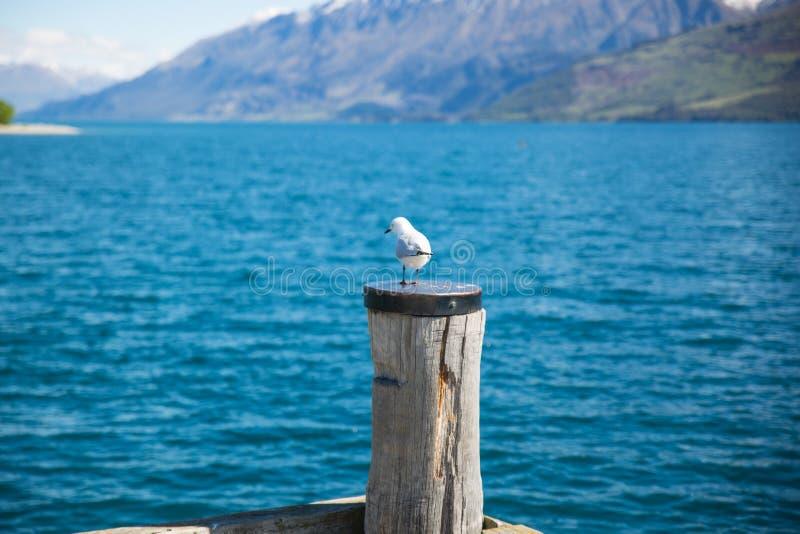 Profondità della fotografia in campo di Gabbiano bianco sulla parte superiore del Polo di legno marrone di fronte al corpo dell'a immagine stock libera da diritti