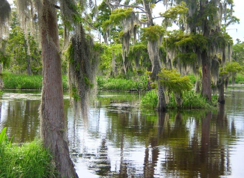 In profondità nella palude dei rami paludosi di fiume della Luisiana fotografie stock