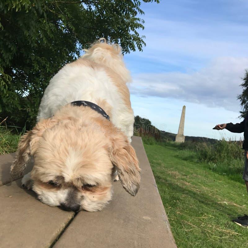 Profumo del cane fotografie stock