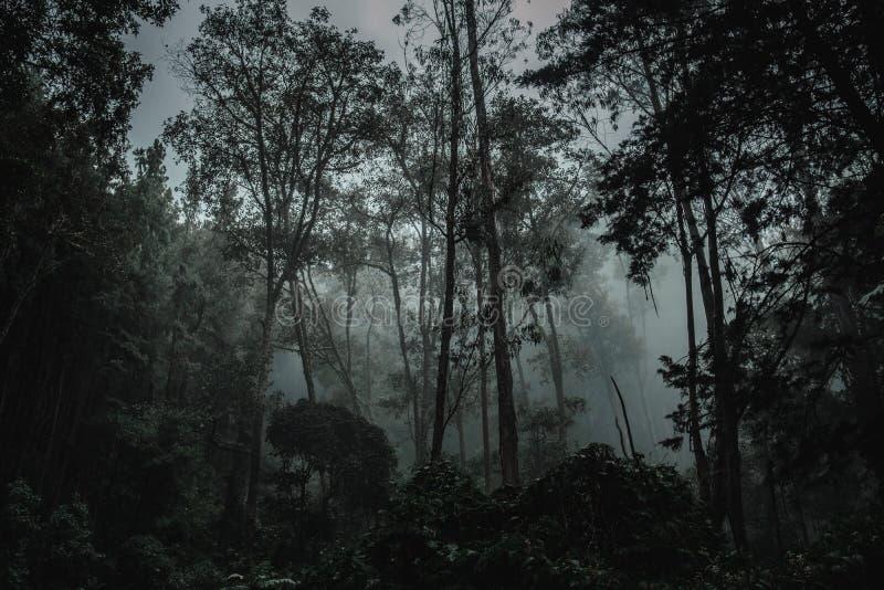 Profundamente en la selva oscura del Amazonas imagenes de archivo
