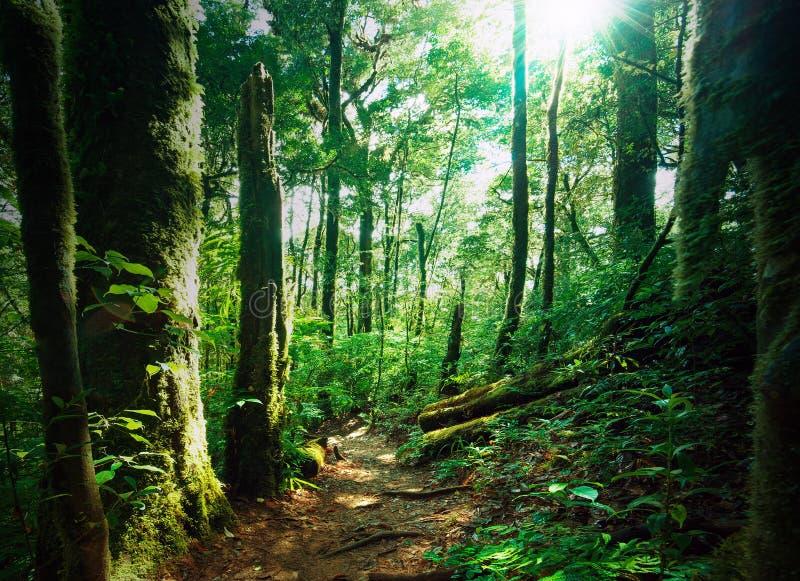 Profundamente - floresta verde com madeiras musgosos e samambaias imagem de stock royalty free