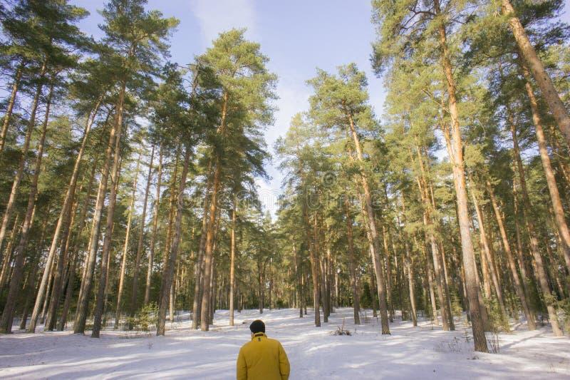 Profundamente na floresta imagens de stock