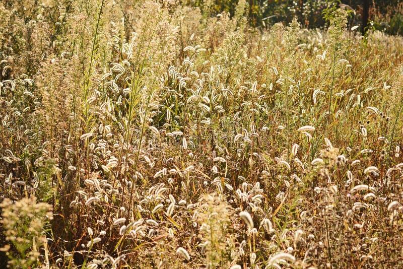 Profundidad del campo baja Fondo borroso del otoño Plantas del otoño Estación del terciopelo El campo salvaje de la hierba en pue fotografía de archivo libre de regalías