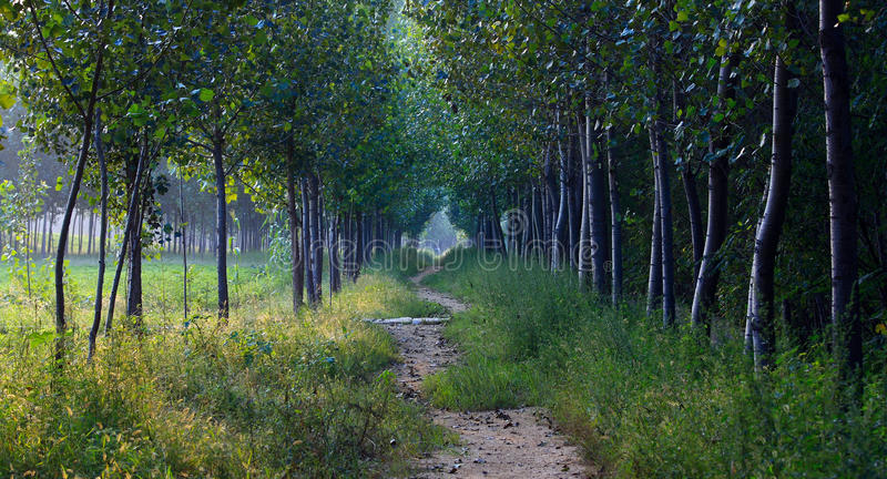Profundidades da floresta foto de stock royalty free