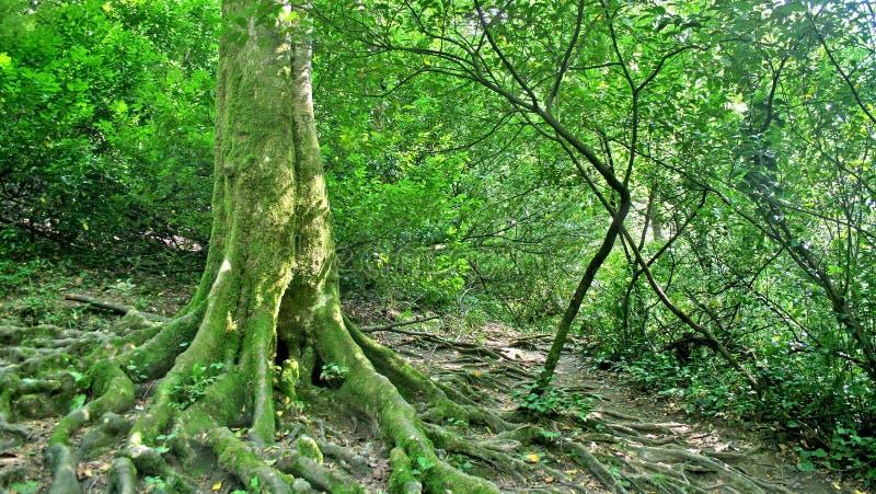 Profundidades da floresta imagem de stock