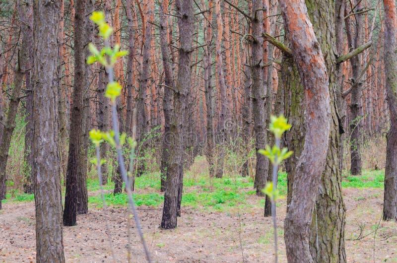Profundidades de uma floresta foto de stock