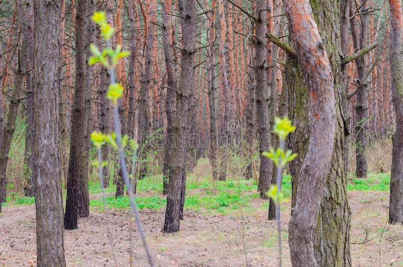 Profundidades de uma floresta imagens de stock royalty free
