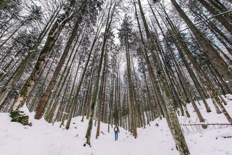 Profundo dentro da floresta bávara fotos de stock