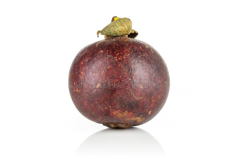 Profundo - mangustão roxo isolado no branco fotografia de stock