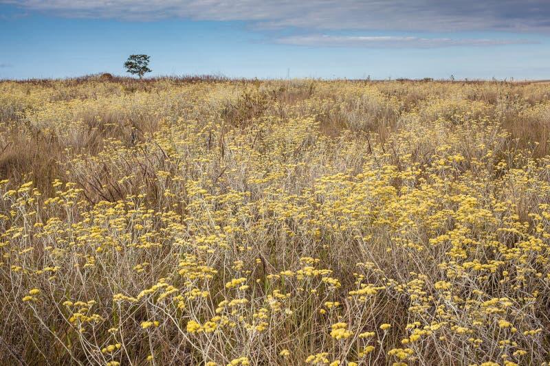 Profusión de flores en el bioma del cerrado Serra da Canastra Nat imagenes de archivo