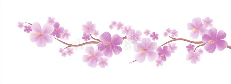 Progettazione dei fiori Bandiera dei fiori Background Fiori di melo Ramo di sakura con i fiori porpora isolati sul fondo bianco d illustrazione vettoriale