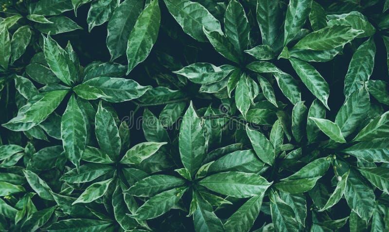 Progettazione del fondo delle foglie verdi Disposizione piana Vista superiore della foglia nave fotografia stock libera da diritti