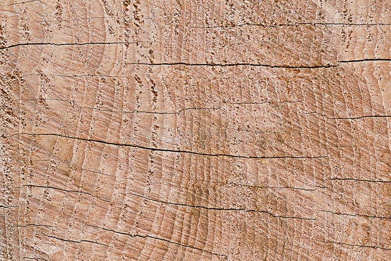Progettazione del legno della crepa per il modello ed il fondo immagine stock