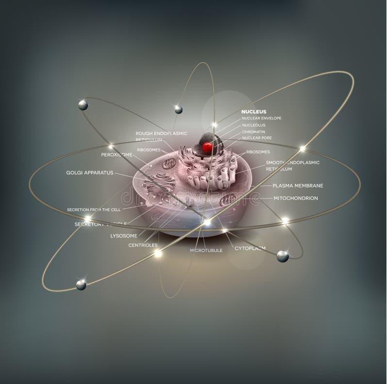 Progettazione dell'atomo dell'estratto di anatomia delle cellule royalty illustrazione gratis