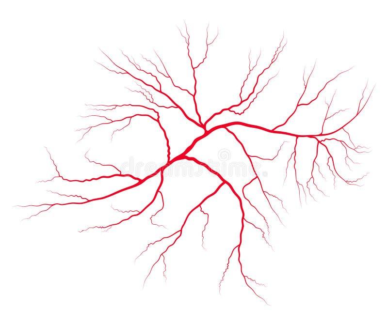 Progettazione dell'icona di simbolo di vettore del sistema del sangue della vena Bello illustrat royalty illustrazione gratis