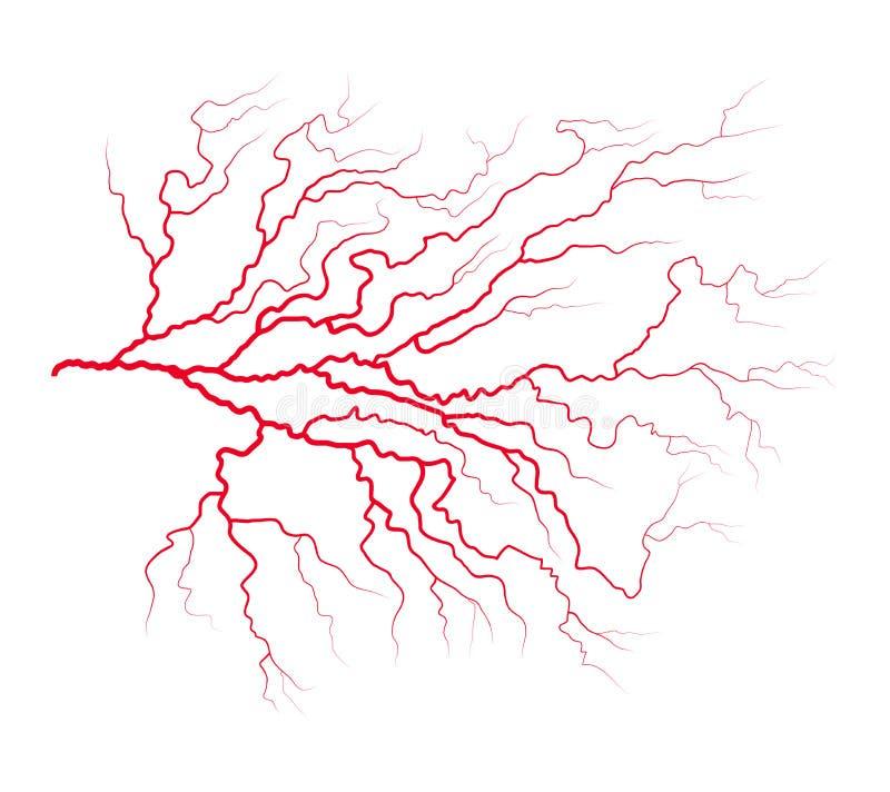 Progettazione dell'icona di simbolo di vettore del sistema del sangue della vena Bello illustrat illustrazione di stock
