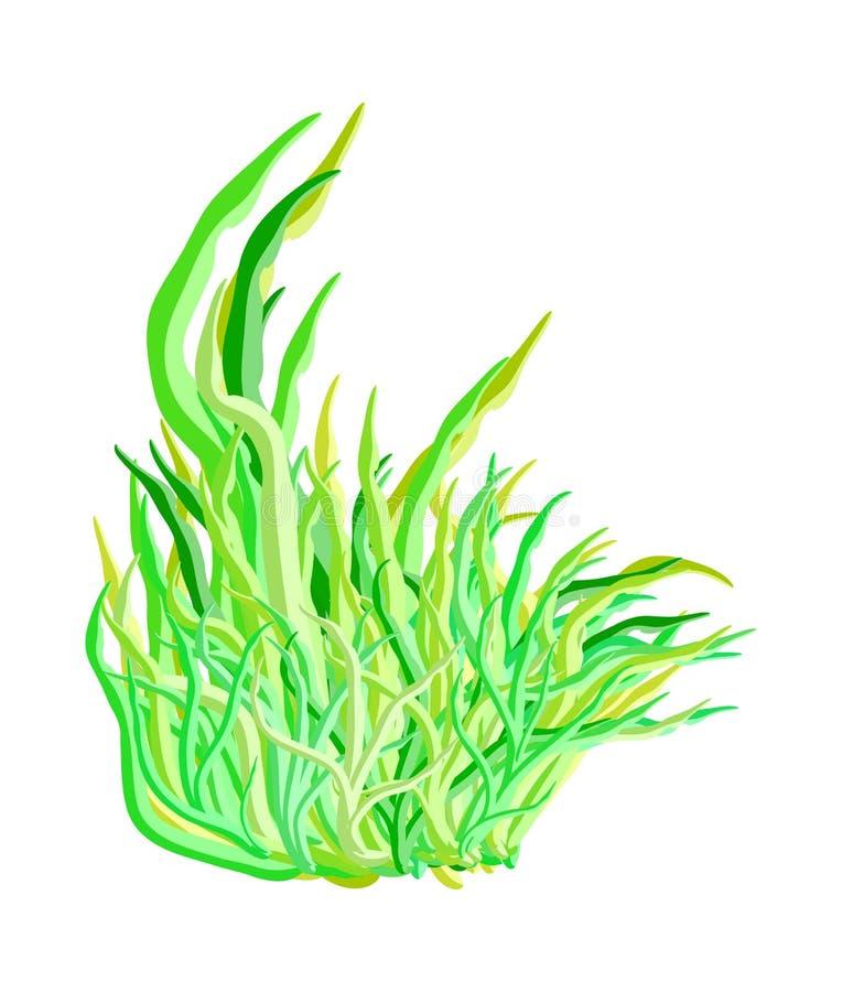 Progettazione dell'icona di simbolo di vettore delle alghe Bella illustrazione isolata illustrazione di stock