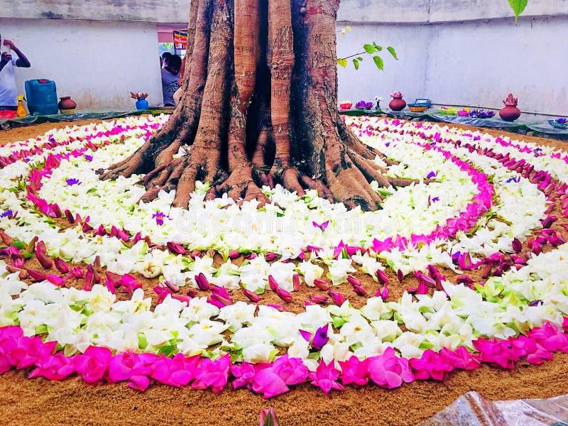 Progettazione dello Sri Lanka dei fiori del tempio fotografia stock