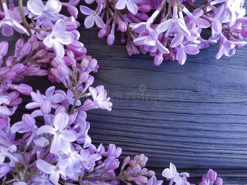Progettazione di stagione della decorazione dei fiori del lillà su un fondo di legno blu scuro bello immagine stock