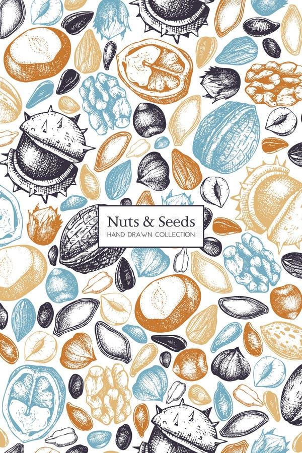 Progettazione di vettore con gli schizzi disegnati a mano dei semi e dei dadi Semi DRA della nocciola, della noce, del pinolo, de illustrazione di stock
