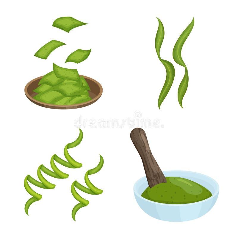 Progettazione di vettore del simbolo dell'alga e di spirulina Raccolta del simbolo di riserva del vegano e di spirulina per il we illustrazione vettoriale