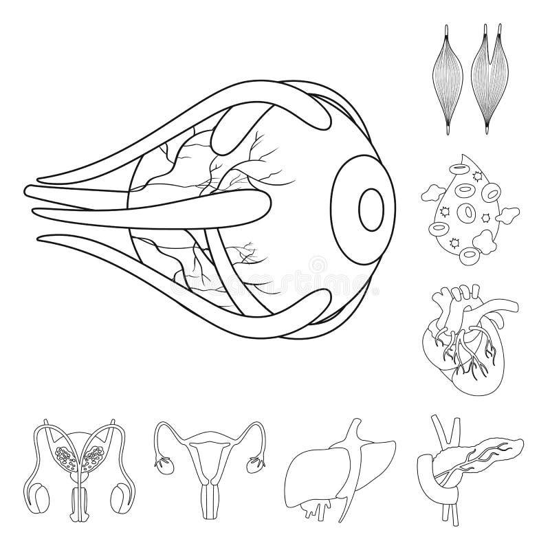 Progettazione di vettore del simbolo dell'organo e di anatomia Metta dell'anatomia e dell'icona medica di vettore per le azione illustrazione vettoriale