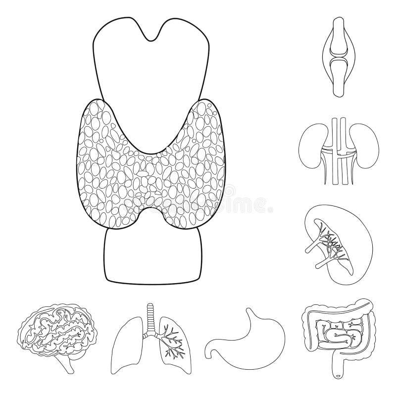 Progettazione di vettore dell'icona dell'organo e di anatomia Raccolta di anatomia ed icona medica di vettore per le azione illustrazione vettoriale