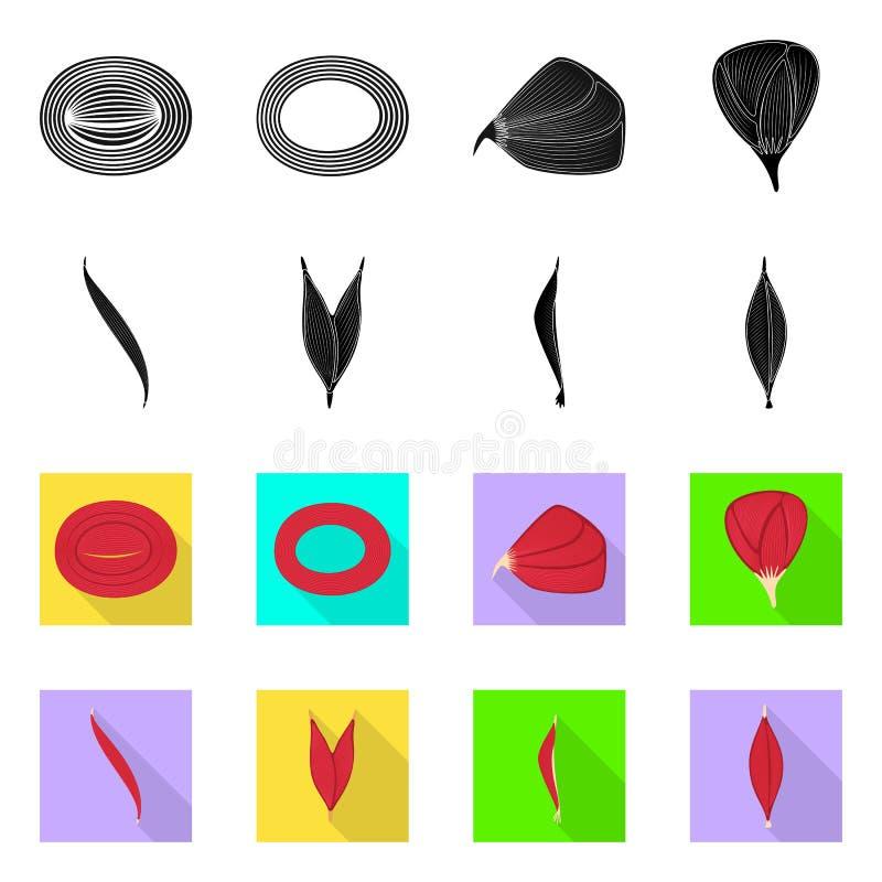 Progettazione di vettore di fibra e del logo muscolare Metta dell'icona di vettore del corpo e della fibra per le azione royalty illustrazione gratis