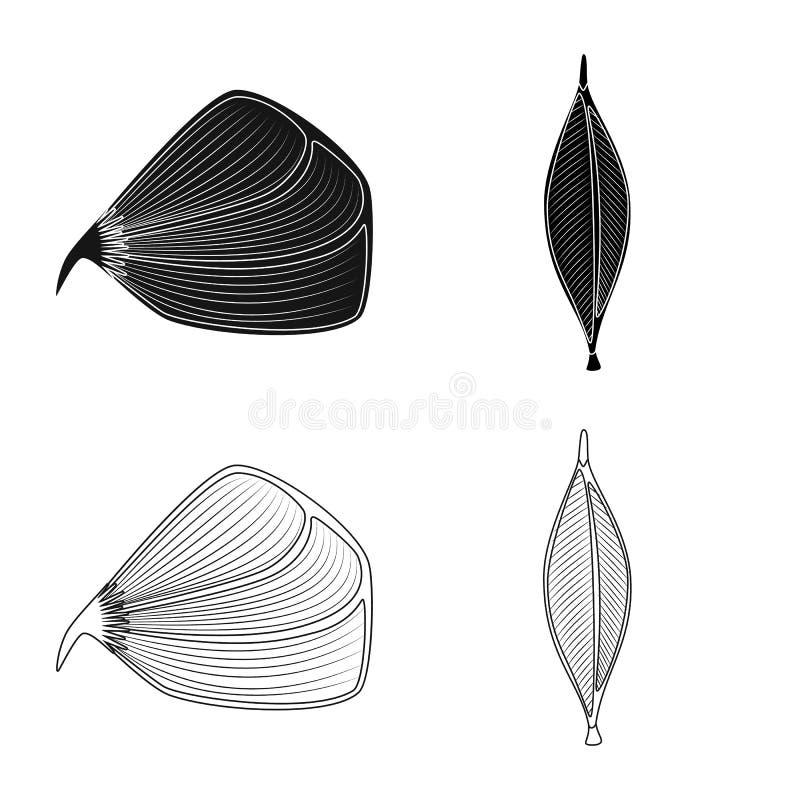 Progettazione di vettore di fibra e del logo muscolare Metta dell'illustrazione di vettore delle azione del corpo e della fibra illustrazione di stock