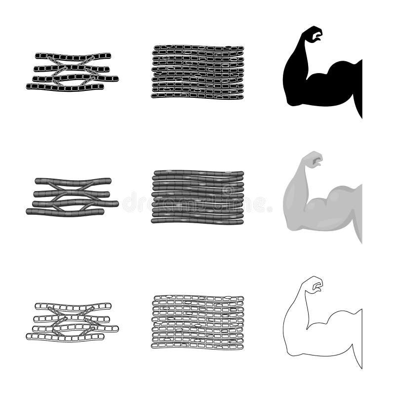 Progettazione di vettore di fibra e del logo muscolare Metta del simbolo di riserva del corpo e della fibra per il web illustrazione vettoriale
