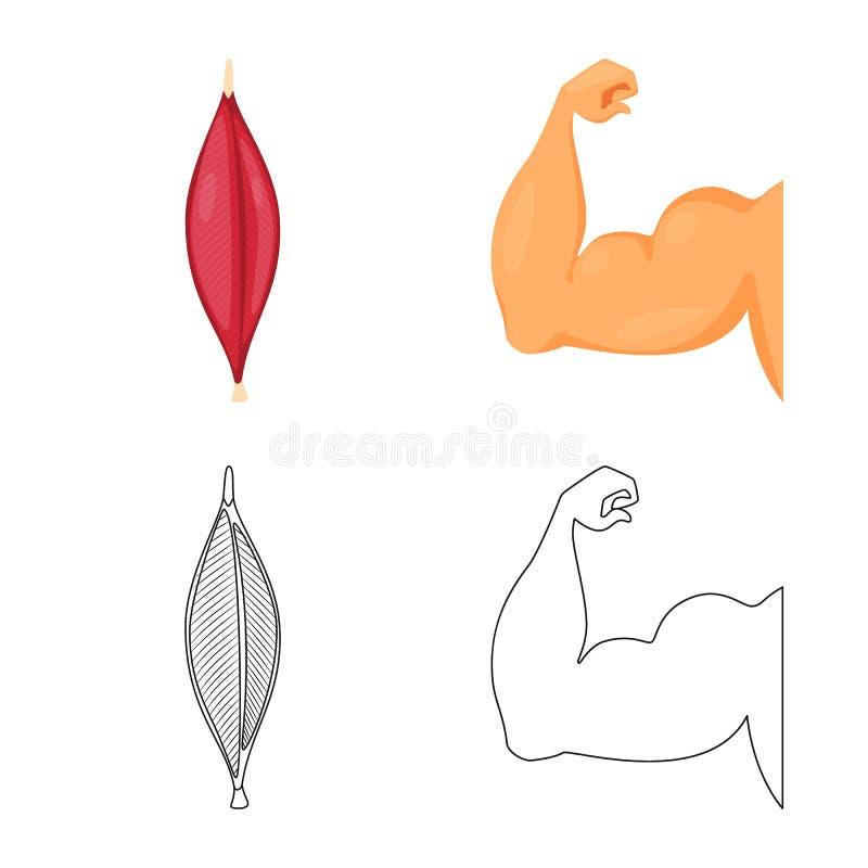 Progettazione di vettore di fibra e del logo muscolare Raccolta dell'icona di vettore del corpo e della fibra per le azione royalty illustrazione gratis