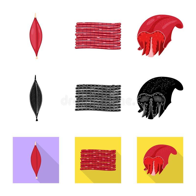 Progettazione di vettore di fibra e del logo muscolare Raccolta dell'illustrazione di vettore delle azione del corpo e della fibr illustrazione vettoriale