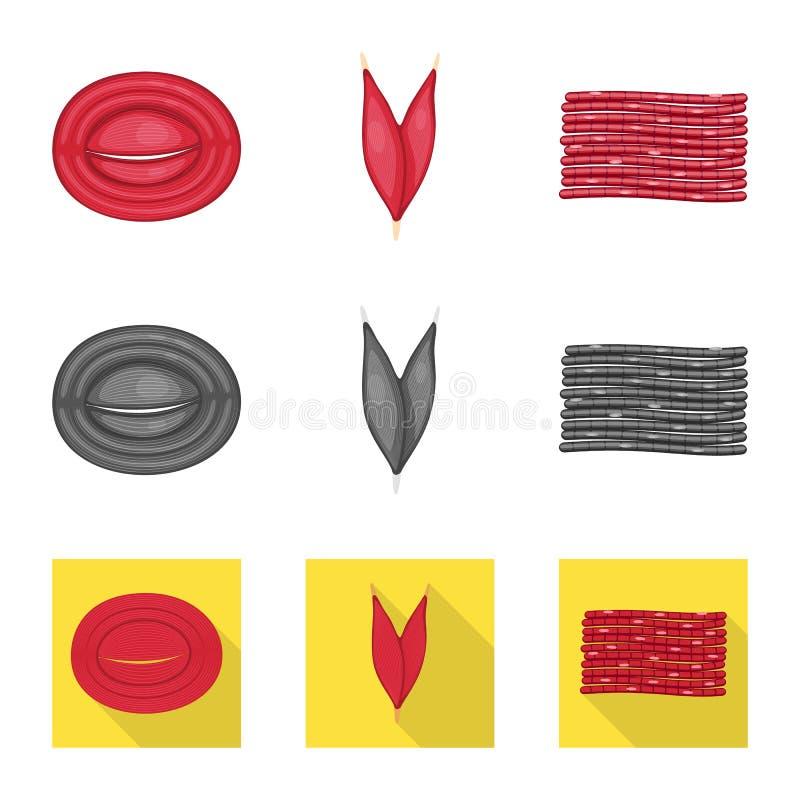 Progettazione di vettore di fibra e del segno muscolare Metta dell'illustrazione di vettore delle azione del corpo e della fibra illustrazione di stock