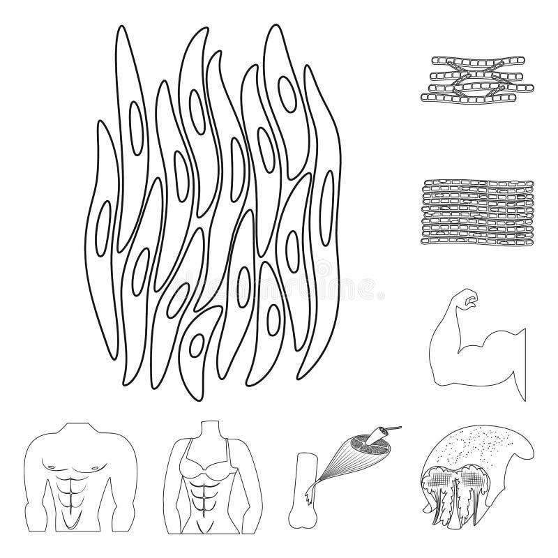 Progettazione di vettore di fibra e del segno muscolare Metta del simbolo di riserva del corpo e della fibra per il web illustrazione vettoriale