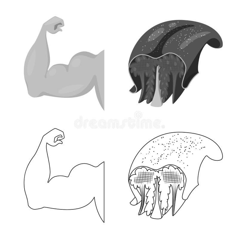 Progettazione di vettore di fibra e del segno muscolare Raccolta dell'icona di vettore del corpo e della fibra per le azione royalty illustrazione gratis
