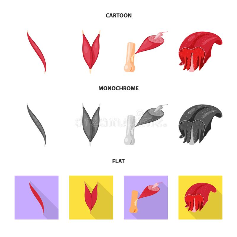 Progettazione di vettore di fibra e del segno muscolare Raccolta del simbolo di riserva del corpo e della fibra per il web illustrazione di stock