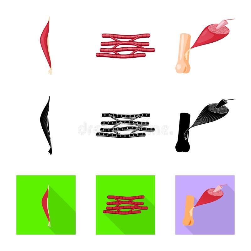 Progettazione di vettore di fibra e del simbolo muscolare Metta dell'illustrazione di vettore delle azione del corpo e della fibr illustrazione vettoriale