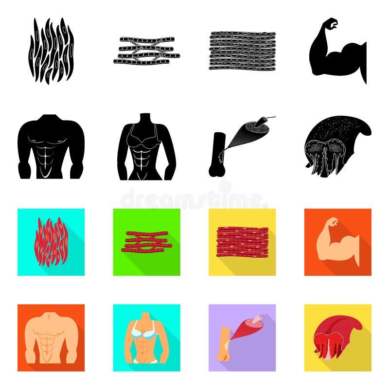 Progettazione di vettore di fibra e del simbolo muscolare Raccolta dell'icona di vettore del corpo e della fibra per le azione royalty illustrazione gratis