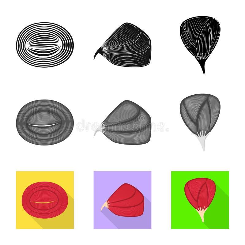 Progettazione di vettore di fibra e del simbolo muscolare Raccolta dell'icona di vettore del corpo e della fibra per le azione illustrazione di stock